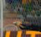 Rui Patrício segura empate em três defesas – Sporting CP 1-1 SL Benfica
